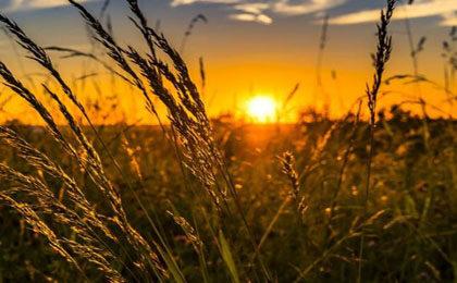 农业保险意义是什么